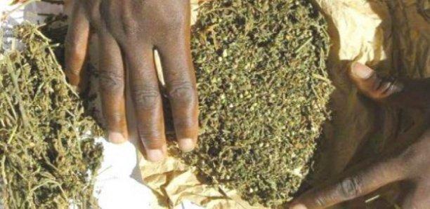 Commissariat central de Mbour : 1 tonne 150 kg de chanvre indien saisis