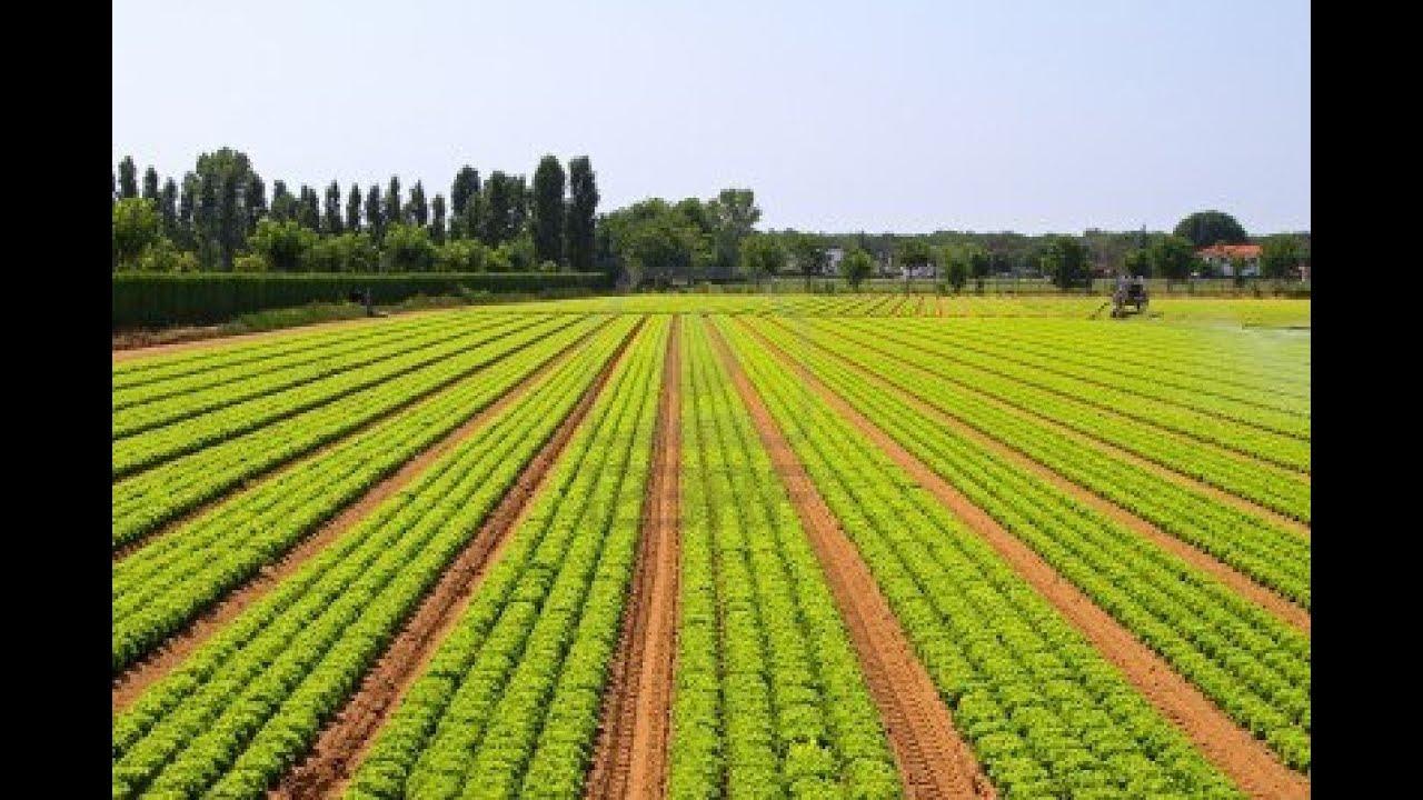 INSÉCURITÉ ALIMENTAIRE : PLAIDOYER POUR UNE AGRICULTURE DURABLE