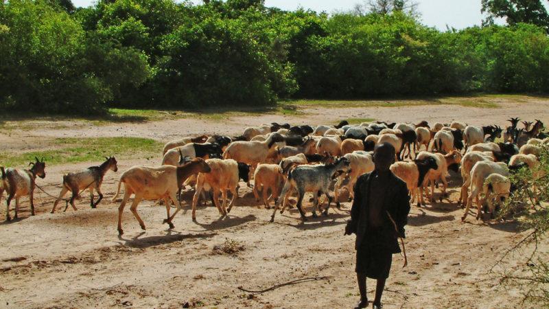 le Sénégal et 4 autres pays du sahel bénéficient d'un montant de 375millions de dollars pour la Résilience des systèmes pastoraux